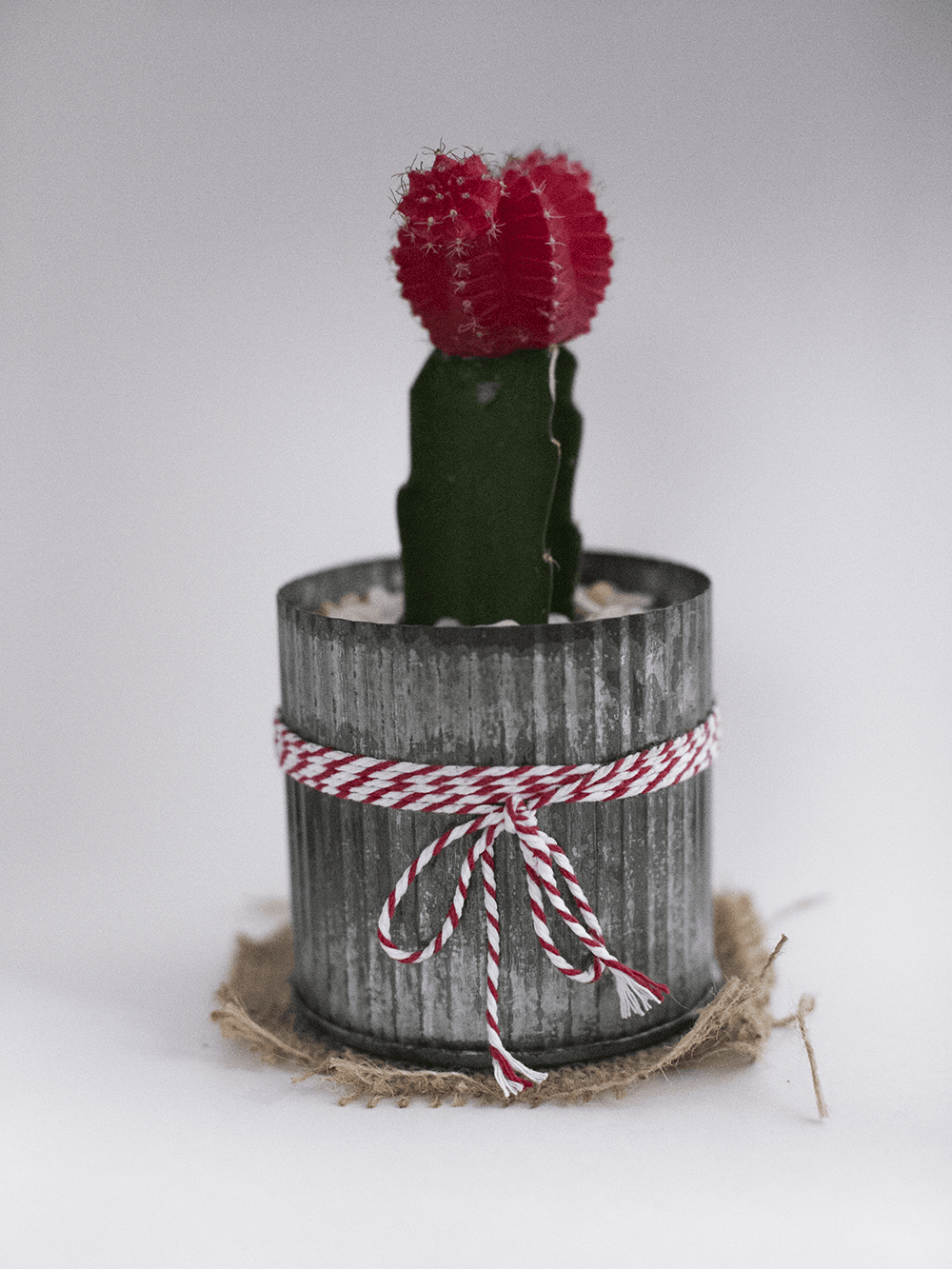 Cactus photo with Canon