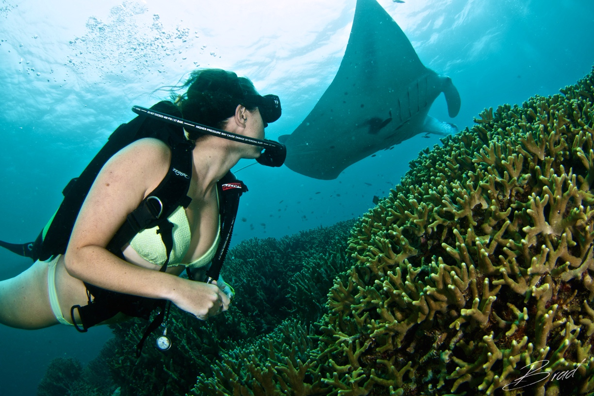 Here's a photo of Sarah diving with manta rays.
